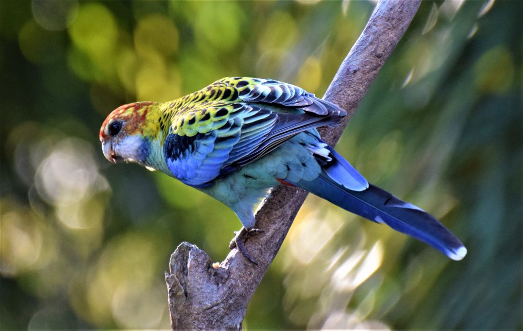 This image has an empty alt attribute; its file name is Rosella-Hybrid3-1-1024x648.jpg