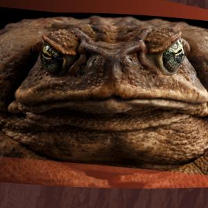 Cane Toad Challenge Enrolment – Adult